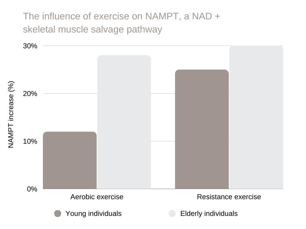 nicotinamide riboside The influence of exercise on NAMPT, a NAD + skeletal muscle salvage pathway